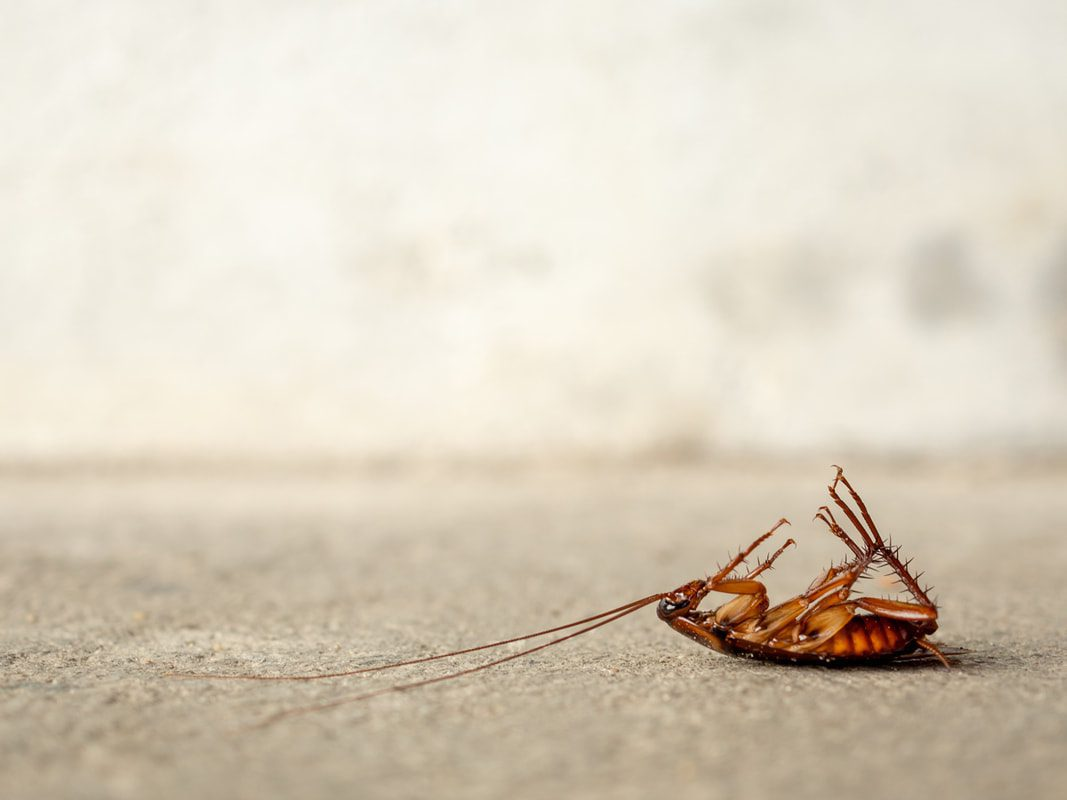 """These Strategies Are Replacing """"Word-Of-Mouth"""" For Pest Control Companies"""